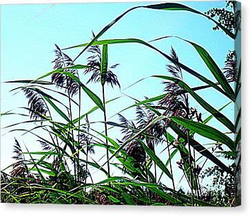 Hay In The Summer Canvas Print by Pauli Hyvonen