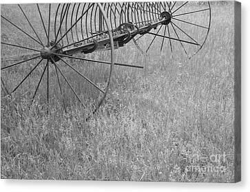 Hay Rake  Canvas Print by Wilma  Birdwell