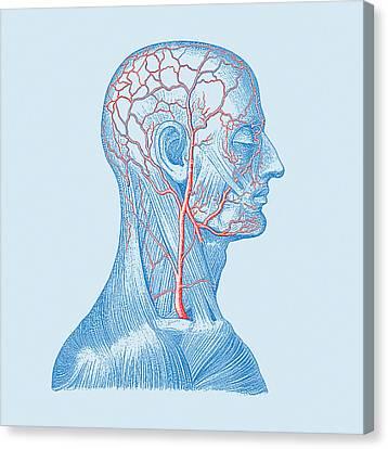 Head Veins Canvas Print by Mehau Kulyk