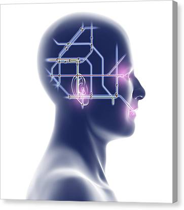Head With Network Diagram Canvas Print by Pasieka