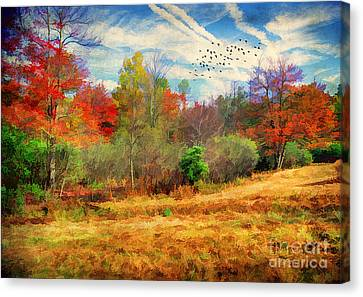 Heading South Canvas Print by Darren Fisher