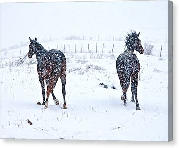 Heading To The Hills Canvas Print by Betsy Knapp