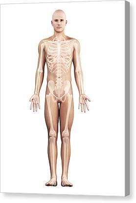 Healthy Skeleton, Artwork Canvas Print