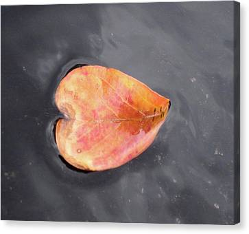 Canvas Print featuring the painting Heart - Leaf by Teresa Beyer