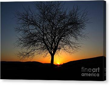 Canvas Print featuring the photograph Heart Of The Land by Everett Houser