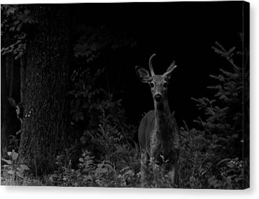Canvas Print featuring the photograph Hello Deer by Cheryl Baxter