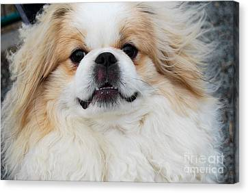 Hello Doggy Canvas Print