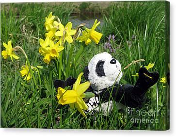 Hello Spring. Ginny From Travelling Pandas Series. Canvas Print by Ausra Huntington nee Paulauskaite