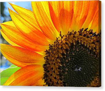 Canvas Print featuring the photograph Hello Sunflower by Tina M Wenger