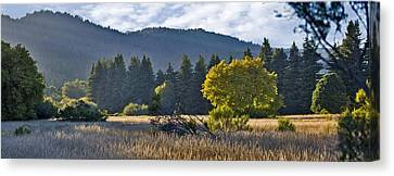 Henry Cowell Meadow Sunset Canvas Print by Larry Darnell