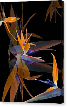 Her Dance Canvas Print by Kathy Rose