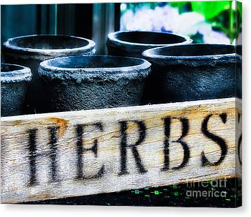 Herb Pots Canvas Print by Colleen Kammerer