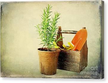 Herbs Canvas Print by Darren Fisher