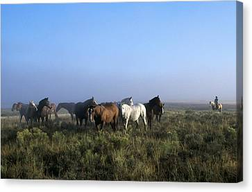 Herd Of Horses And Cowboy On Horseback Canvas Print by Natural Selection Craig Tuttle