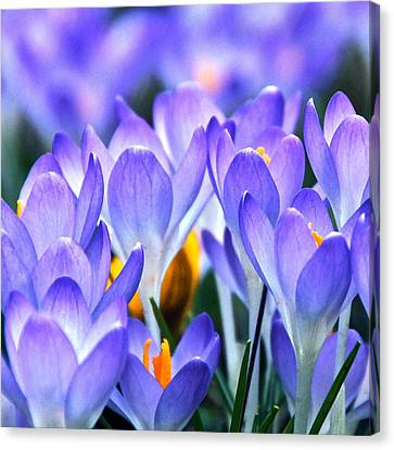 Here Come The Croci Canvas Print by Byron Varvarigos