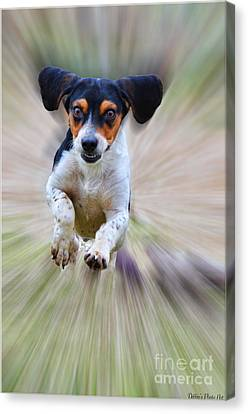 Here I Come Canvas Print by Debbie Portwood