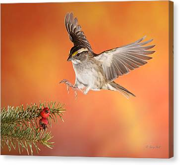 Canvas Print featuring the photograph Here I Come by Gerry Sibell