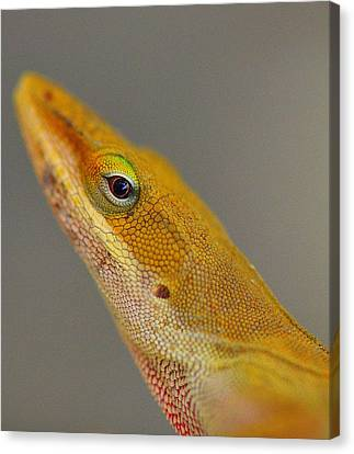 Canvas Print featuring the photograph Here Lizard Lizard by Tanya Tanski