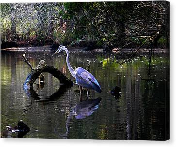 Heron And Root Canvas Print by Christy Usilton