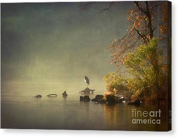 Heron In Morning Mist Canvas Print by Susan Isakson