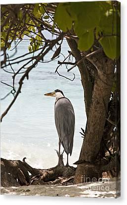 Sea Watch Canvas Print - Heron by Jane Rix