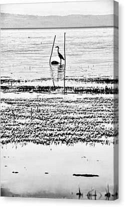 Heron Canvas Print by Okan YILMAZ