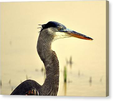 Heron One Canvas Print by Marty Koch