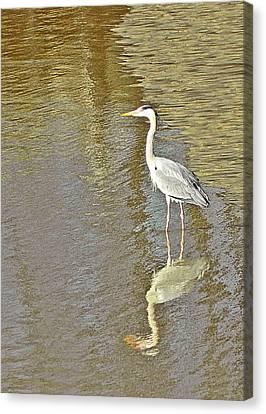 Heron Canvas Print by Sharon Lisa Clarke