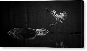 Heron's Land Canvas Print by Brian Young