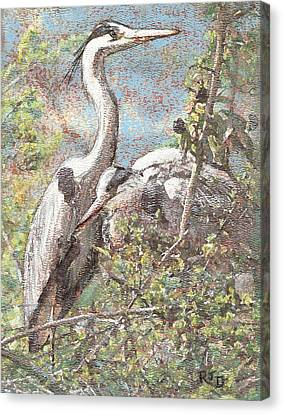 Canvas Print featuring the painting Herons Resting by Richard James Digance