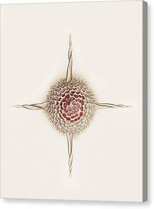 Hexastylus Radiolarian, Artwork Canvas Print