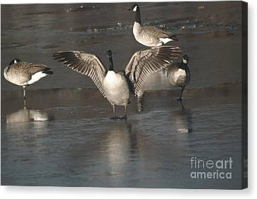 Canvas Print featuring the photograph Hey Over Here by Mark McReynolds