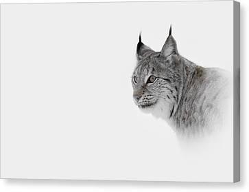 Hi Key Lynx Canvas Print by Andy Astbury