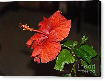 Canvas Print featuring the photograph Hibiscus Bloom by Mark McReynolds
