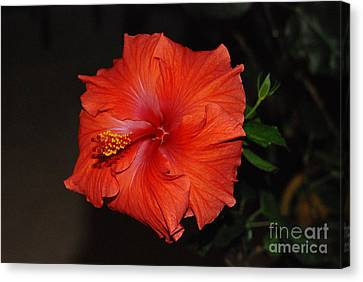 Canvas Print featuring the photograph Hibiscus Close Up by Mark McReynolds