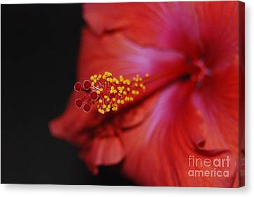 Canvas Print featuring the photograph Hibiscus Extreme by Mark McReynolds