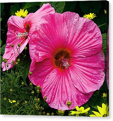 Canvas Print featuring the photograph Hibiscus by Michael Friedman