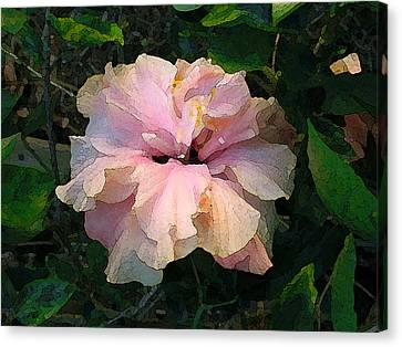 Hibiscus Radiant Canvas Print
