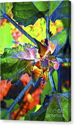 Hidden In Color Canvas Print by Gwyn Newcombe