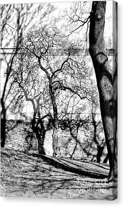 Hidden Tree Canvas Print by Matthias Siewert