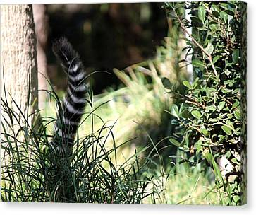 Hiding In The Brush Canvas Print by Dee  Savage