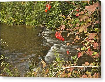 High Bush Cranberry 7823 Canvas Print by Michael Peychich