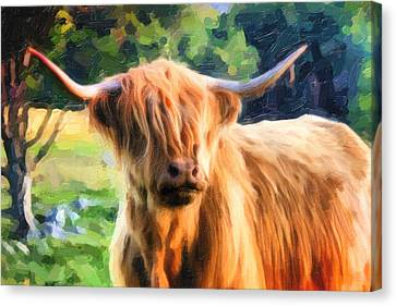 Highland Bull Canvas Print by Dave Nielsen