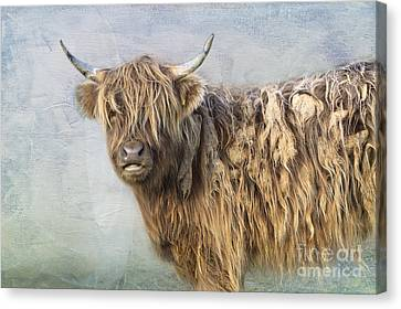 Highland Cattle Canvas Print by Louise Heusinkveld