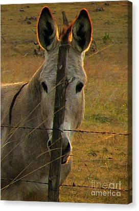 Hill Country Camouflage Canvas Print by Joe Jake Pratt
