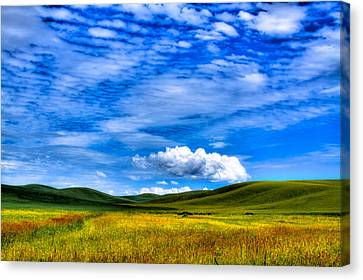 Hills Of Wheat In The Palouse Canvas Print by David Patterson