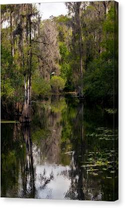 Hillsborough River In March Canvas Print by Steven Sparks