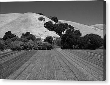 Canvas Print featuring the photograph Hillside Farmland by Kathleen Grace