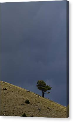 Canvas Print featuring the photograph Hillside Tree by J L Woody Wooden