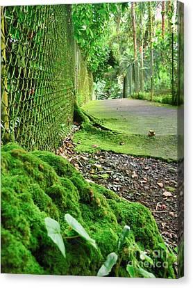 Canvas Print featuring the photograph Hilo Garden by Joe Finney